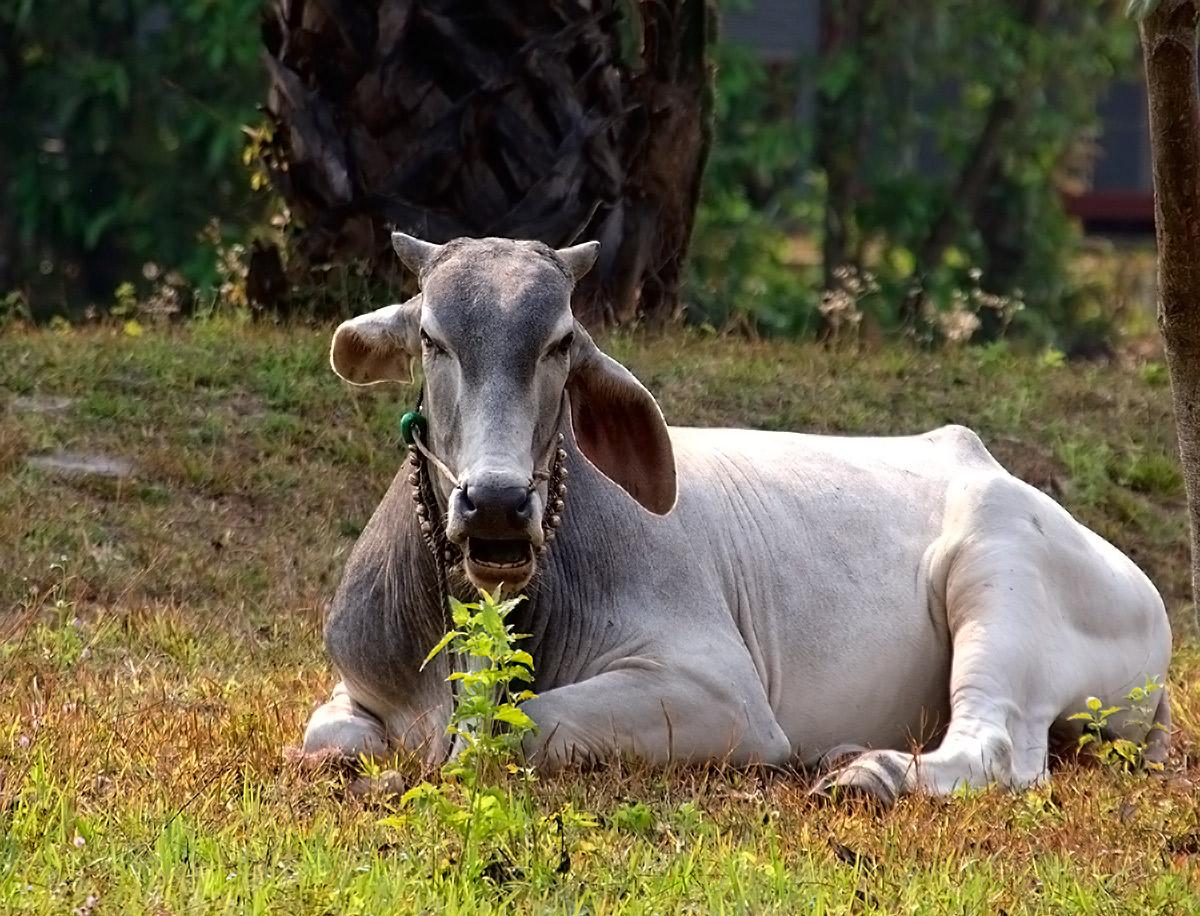 我在柬埔寨看到的动物.(柬埔寨旅游之四)