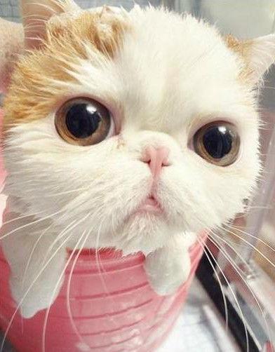 > 萌死人的:加菲猫洗澡到吹干全过程