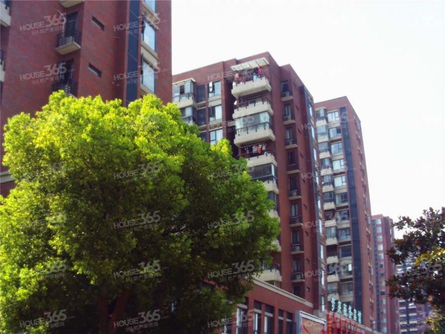 天鹅湖旁科技住宅,五十中,恒温恒静恒氧恒湿
